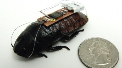 Schabe mit Chip: klein, robust und wendig