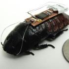 Cyborg: US-Forscher steuern Küchenschabe fern
