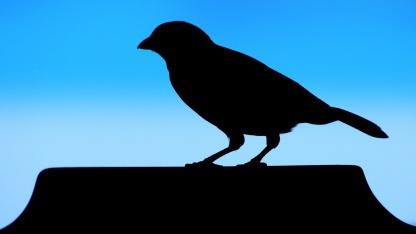 Privatsphäre: Gericht zwingt Twitter zur Herausgabe von Nutzerdaten