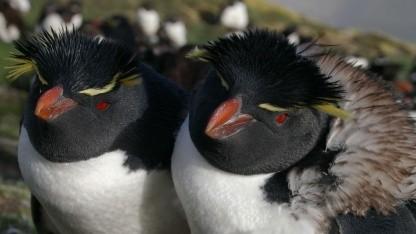 Linux 3.7 erhält zahlreiche Neuerungen für ARM-CPUs.