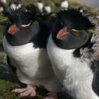Linux: Kernel 3.7 erhält viel ARM-Code