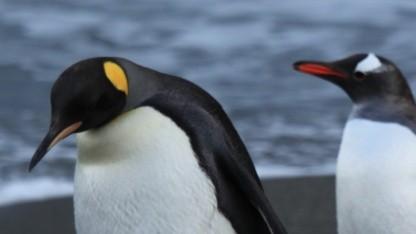 Nur zwei Anwender sind von einem Fehler im Linux-Dateisystem Ext4 betroffen.