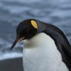 Linux-Dateisysteme: Aufregung um Ext4-Bug