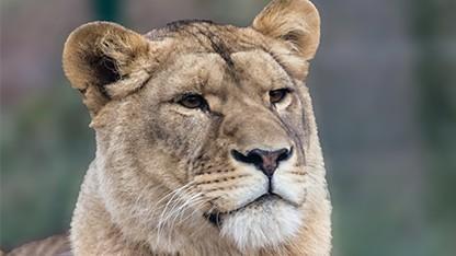Über die Website Snapshot Serengeti  können wilde Tiere bestimmt werden.