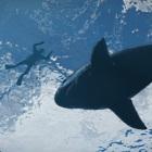 Rockstar Games: GTA 5 und der Blick aus der Tiefe