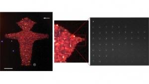 IBM Research: Nanorods gegen Fälschungen