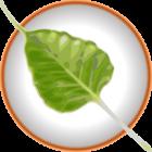 Enlightenment: Bodhi Linux 2.2.0 mit finalem E17