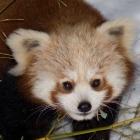 Browsersicherheit: Firefox deaktiviert alle Java-Plugins