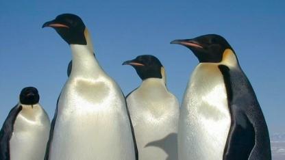 Linux hat im Umgang mit Secure-Boot noch einige Schwachstellen.