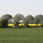 Pflanzenstrom: Niederländer bauen unterirdische Brennstoffzelle