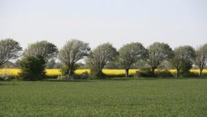 P-MFC: Pflanzen zu Kraftwerken (Symbolbild)
