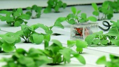 Ein Harvestgeek-Sensor inmitten von Pflanzen