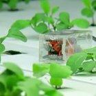 Open Source Hardware: Pflanzen gießen mit der Cloud