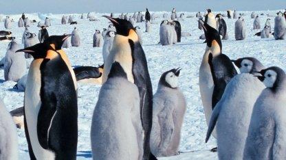 Die Kernel-Entwickler haben mit vielen kleinen Änderungen in Linux 3.8 für mehr Leistung gesorgt.
