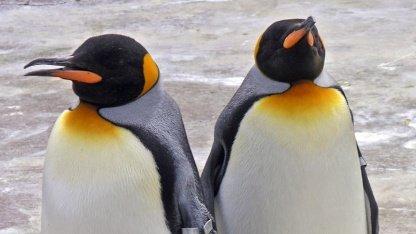 Der Linux-Kernel ab Version 3.3 enthält eine gefährliche Sicherheitslücke.