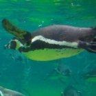 Linux-Kernel 3.9: Viel Grafisches und mit Goldfischen
