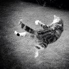 Kontrollierte Stürze: iPhones sollen wie Katzen fallen