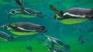 Linux Kernel: Torvalds schließt Merge-Fenster für Linux 3.9
