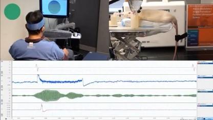 Fernsteuerung per Gedanken: Hirnströme passen sich optischem Reiz an.