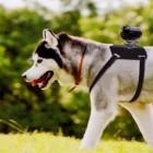 Sony: Hund als Action-Kameramann