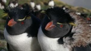 Linux-Pinguine können sich bald über Tegra-Treiber freuen.