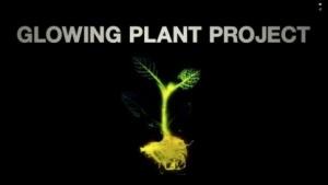 Glowing Plant Project: keine Samen für Spender aus Europa