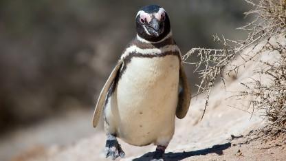 Die Testphase für Linux 3.10 beginnt.