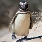 Linux: Kernel 3.10 tickt ein wenig weniger