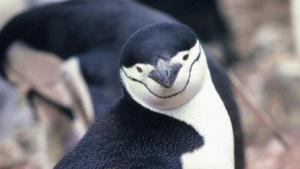 Mit dem Linux-Kernel 3.10 verschwinden langsam die Ticks.