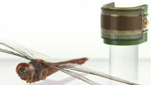 Insektenauge im Größenvergleich mit einer Libelle