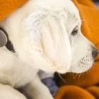 Quantified Hasso: Smartphone-Anbindung für den Hund