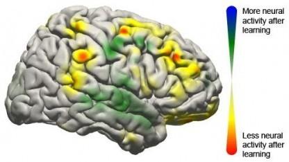 Gehirnmodell mit aktiven Regionen bei BCI-Nutzung: Muster wie bei quasi automatischen Handlungen
