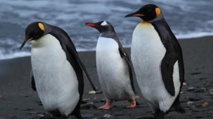 Linux 3.11 tritt in die Testphase ein.