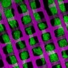 Tissue Engineering: Chipproduktionswerkzeuge helfen beim Organbau