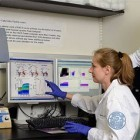 Medizin: Roboter aus Molekülen markieren Zellen