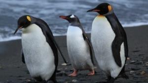 Linux 3.11 ist veröffentlicht worden.