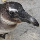 Linux-Kernel: Probleme im USB-Stack entdeckt