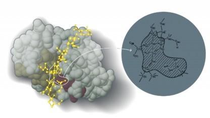 Modell eines Enzyms von Warshel und Levitt