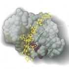 Nobelpreis: Auszeichung für Computermodelle der Chemie