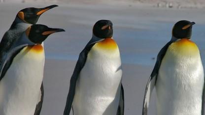 Der Linux-Kernel soll einen neuen Paketfilter bekommen.