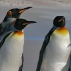 Betriebssysteme: Linux-Kernel 3.16 beschleunigt die Grafik