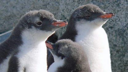 Linux-Kernel: Effizienter rendern mit getrenntem DRM und KMS