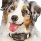Voyce-Halsband: Fitnesstracker für Hunde