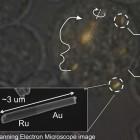 Zellbiologie: Nanomaschinen manipulieren Zellen