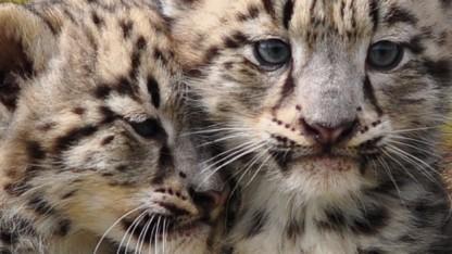Ein letztes Update für Snow Leopard