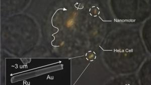 Hela-Zelle mit Nanomaschine: Ultraschallantrieb und Magnetlenkung