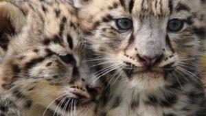 Aus die Maus für Snow Leopard