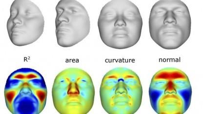 3D-Modelle von Gesichtern: Einfluss von Geschlecht, Abstammung und Genen