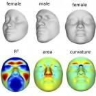 Genetik: Forscher wollen Gesicht aus Genen rekonstruieren
