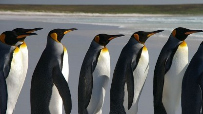 Der Linux-Kernel hat Fehler in der Speicherverwaltung.